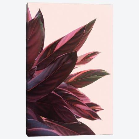 Pink Kalathea II Canvas Print #CTI157} by Emanuela Carratoni Canvas Art