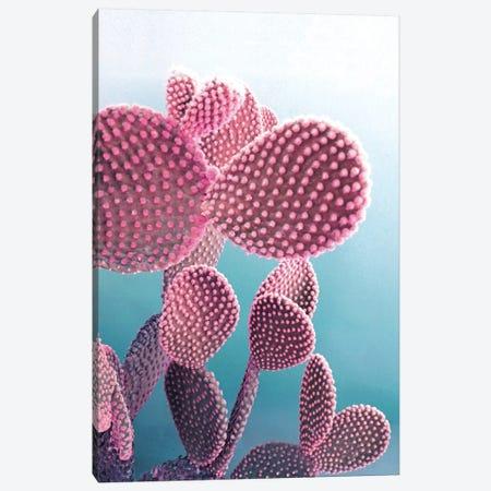 Candy Cactus Canvas Print #CTI16} by Emanuela Carratoni Canvas Art