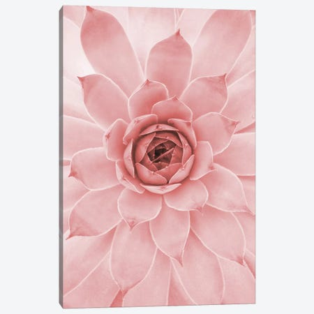 Pale Pink Succulent 3-Piece Canvas #CTI204} by Emanuela Carratoni Canvas Wall Art