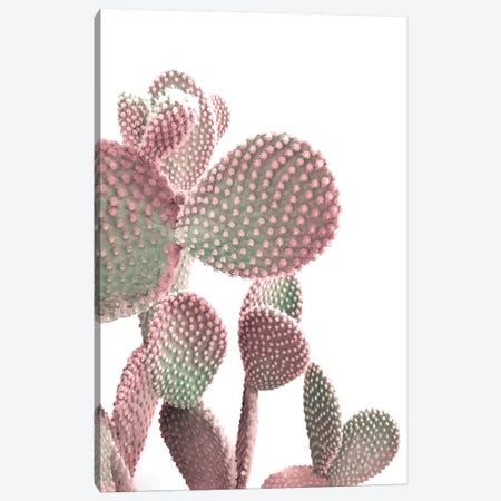 Cactus On White 3-Piece Canvas #CTI254} by Emanuela Carratoni Art Print