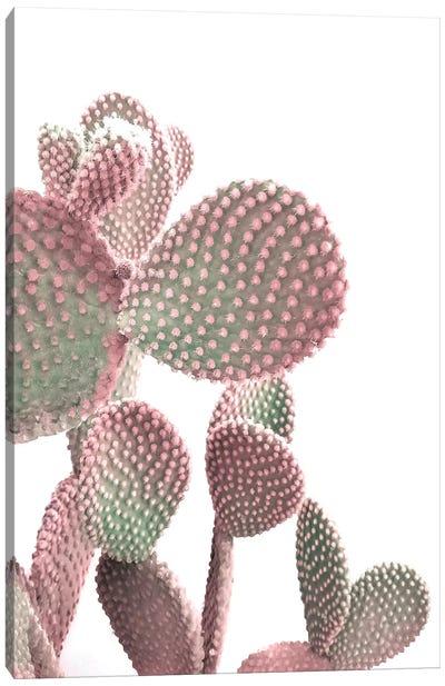 Cactus On White Canvas Art Print
