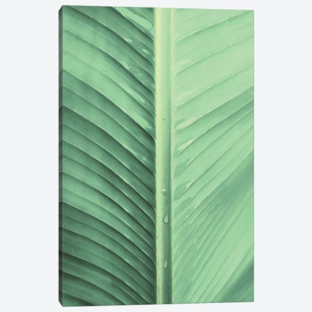 Banana Leaf 3-Piece Canvas #CTI260} by Emanuela Carratoni Art Print