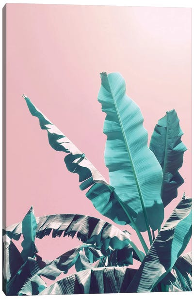 Bananas On Pink Canvas Art Print