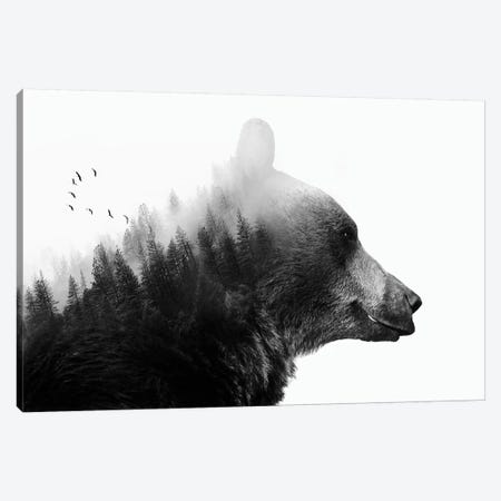 Big Bear I Canvas Print #CTI6} by Emanuela Carratoni Art Print