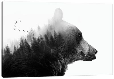 Big Bear I by Emanuela Carratoni Canvas Art Print