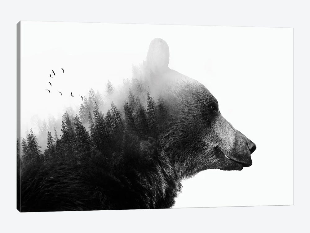 Big Bear I by Emanuela Carratoni 1-piece Canvas Art