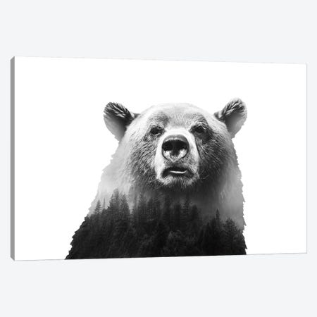 Big Bear III Canvas Print #CTI7} by Emanuela Carratoni Art Print
