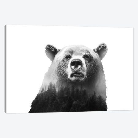 Big Bear III Canvas Print #CTI7} by Emanuela Carratoni Art Print