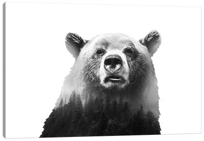 Big Bear III Canvas Art Print