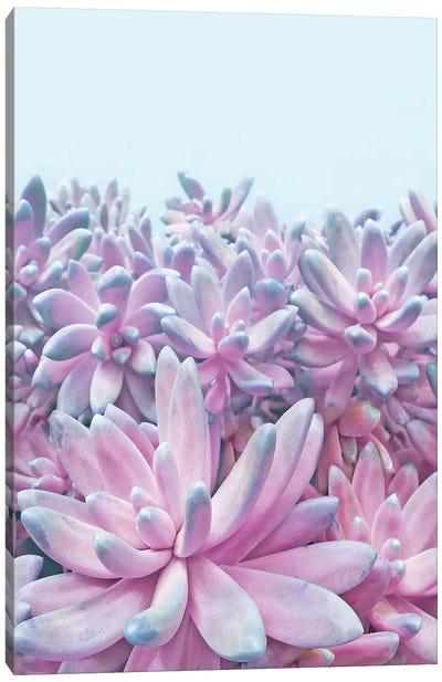 Sweet Succulents Canvas Art Print