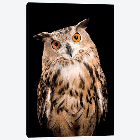 Owl On Black Canvas Print #CTL100} by Catherine Ledner Canvas Artwork