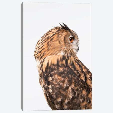 Owl On White Canvas Print #CTL101} by Catherine Ledner Canvas Art