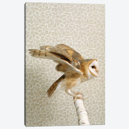 Owl Wings Spread Canvas Print #CTL102} by Catherine Ledner Canvas Wall Art