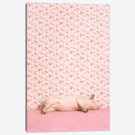 Pig Lying Down Canvas Print #CTL105} by Catherine Ledner Canvas Print