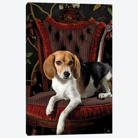 Proud Beagle Canvas Print #CTL108} by Catherine Ledner Canvas Artwork