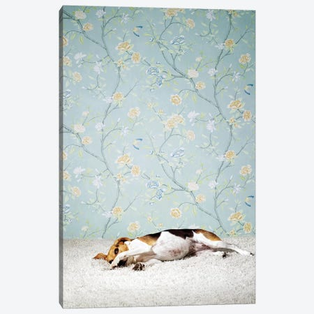 Beagle Lying Down Canvas Print #CTL10} by Catherine Ledner Canvas Artwork