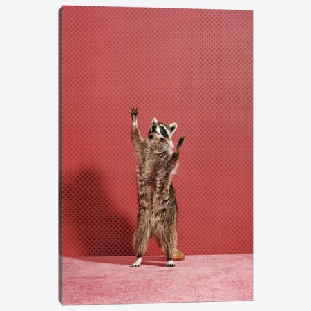 Raccoon Reaching Canvas Print #CTL112} by Catherine Ledner Art Print