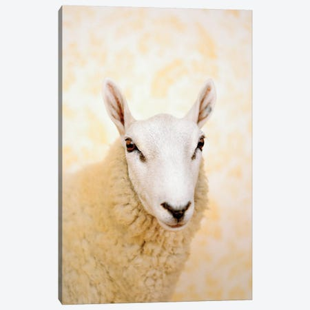 Sheep Close Up Canvas Print #CTL116} by Catherine Ledner Canvas Wall Art