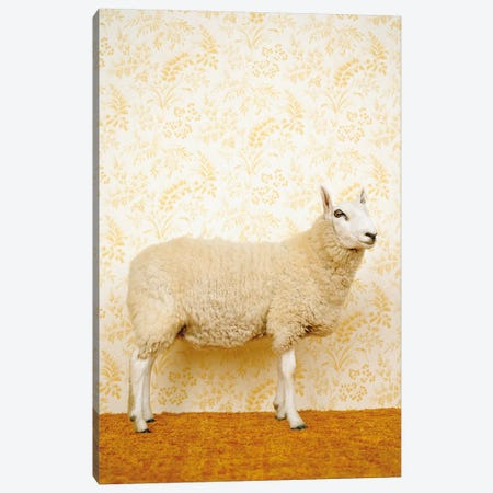 Sheep Standing On Yellow 3-Piece Canvas #CTL117} by Catherine Ledner Canvas Wall Art