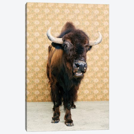Bison Head On Canvas Print #CTL14} by Catherine Ledner Canvas Print