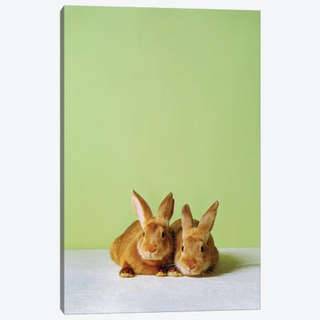 Bunny Friends Canvas Print #CTL22} by Catherine Ledner Art Print
