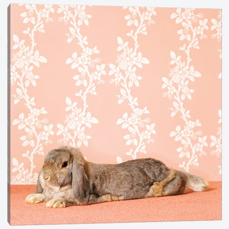 Bunny Lying Down Canvas Print #CTL23} by Catherine Ledner Canvas Art Print