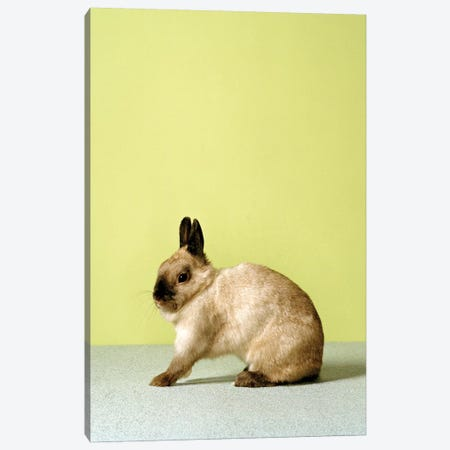 Bunny Stretching Canvas Print #CTL25} by Catherine Ledner Canvas Wall Art
