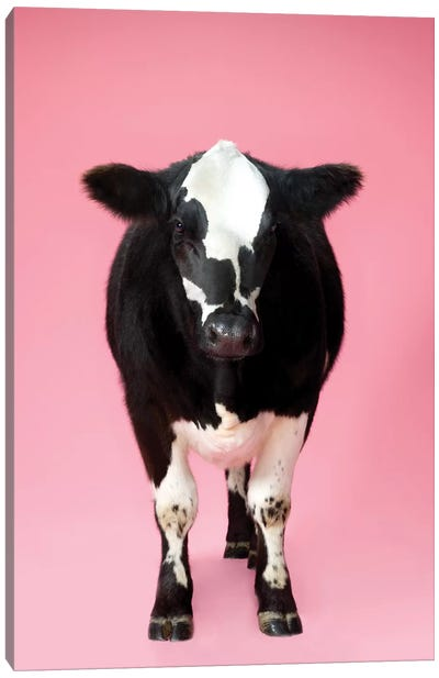 Cow On Pink Canvas Art Print
