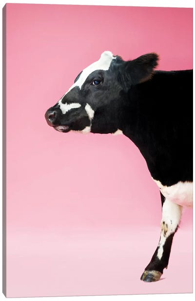 Cow On Pink Profile Canvas Art Print