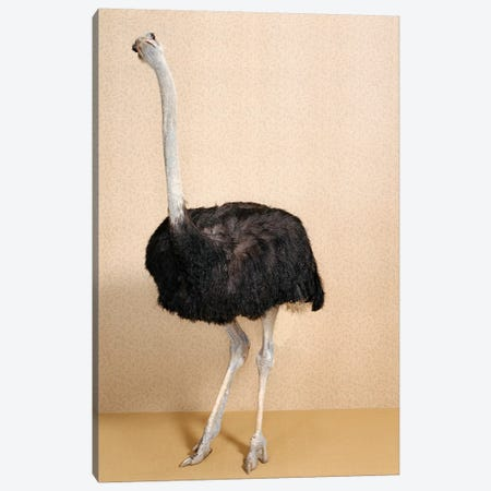Curious Ostrich Canvas Print #CTL31} by Catherine Ledner Canvas Wall Art