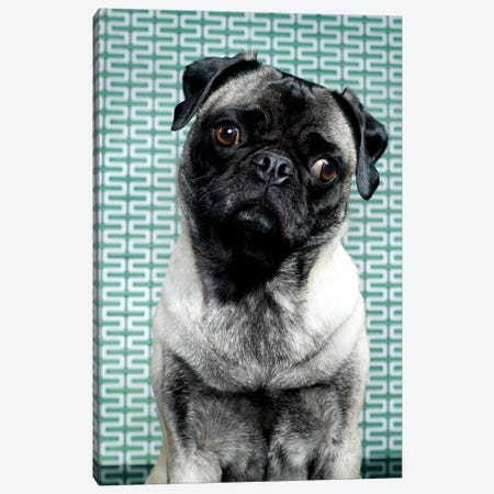 Curious Pug Canvas Print #CTL32} by Catherine Ledner Canvas Artwork