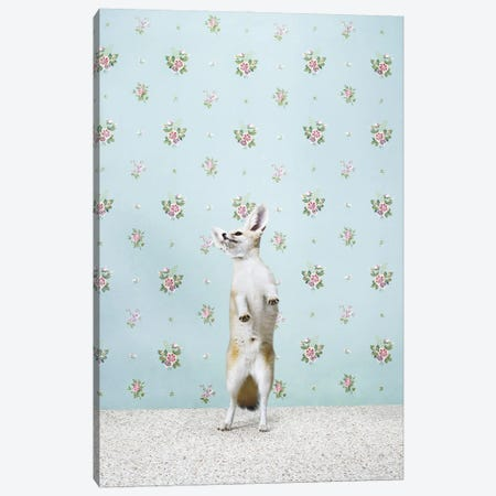 Fennec Fox Dancing Canvas Print #CTL42} by Catherine Ledner Canvas Print
