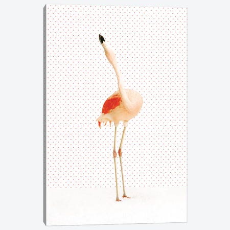 Flamingo V Canvas Print #CTL46} by Catherine Ledner Canvas Art