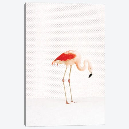 Flamingo VI-II Canvas Print #CTL49} by Catherine Ledner Canvas Print