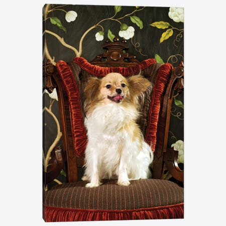 Fluffy In Fancy Chair Canvas Print #CTL51} by Catherine Ledner Canvas Art