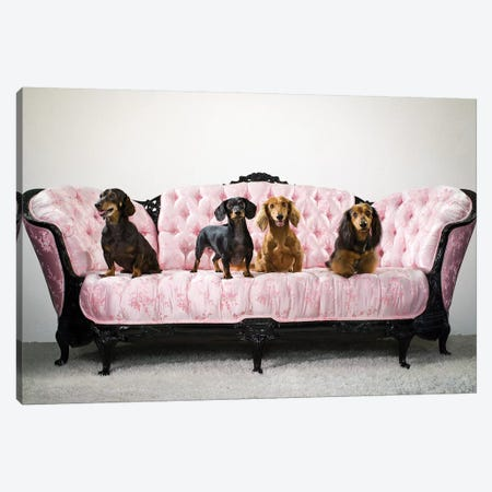 Group Of Dachshunds On Pink Sofa Canvas Print #CTL59} by Catherine Ledner Canvas Wall Art