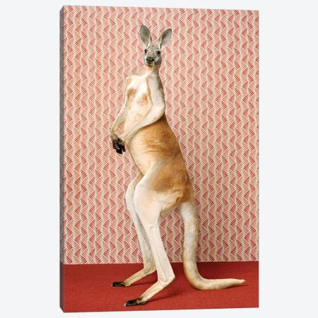 Kangaroo Standing Tall Canvas Print #CTL66} by Catherine Ledner Canvas Wall Art