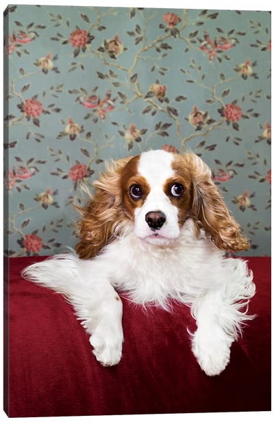 King Charles On Red Chair Canvas Art Print