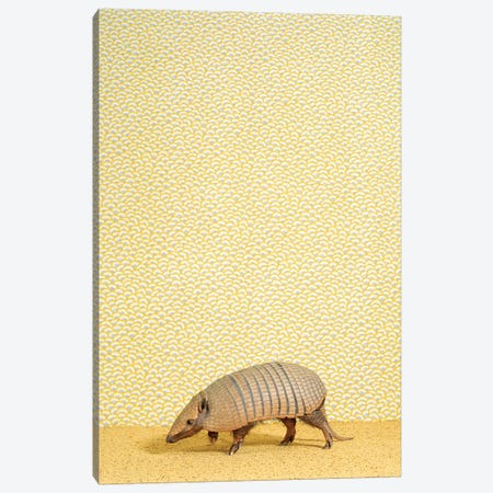 Armadillo On Tippy Toes Canvas Print #CTL6} by Catherine Ledner Canvas Wall Art