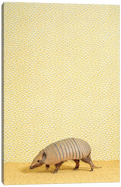 Armadillo On Tippy Toes Canvas Art Print