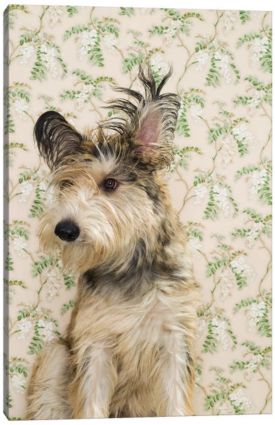 Long Haired Terrier On Flowers Canvas Art Print