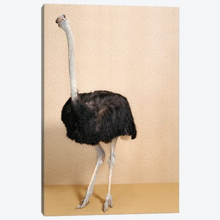 Ostrich III Canvas Print #CTL97} by Catherine Ledner Canvas Art Print