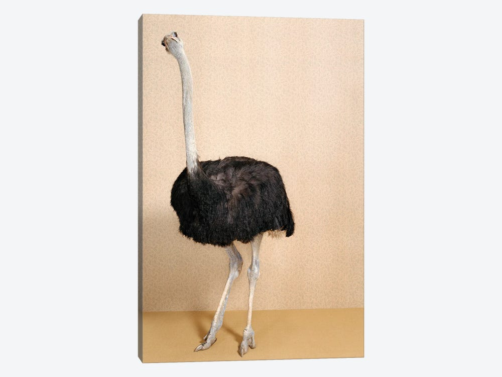 Ostrich III by Catherine Ledner 1-piece Canvas Print