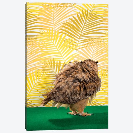 Owl Fluffing Feathers From Back Canvas Print #CTL98} by Catherine Ledner Canvas Wall Art