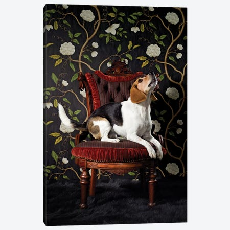 Beagle Howling Canvas Print #CTL9} by Catherine Ledner Canvas Art Print
