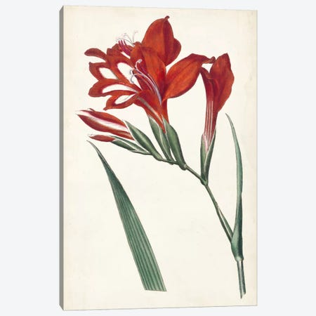 Curtis Garden Beauties VI Canvas Print #CTS12} by Curtis Canvas Print