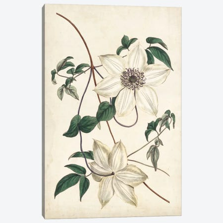 Ivory Garden II Canvas Print #CTS14} by Curtis Canvas Artwork