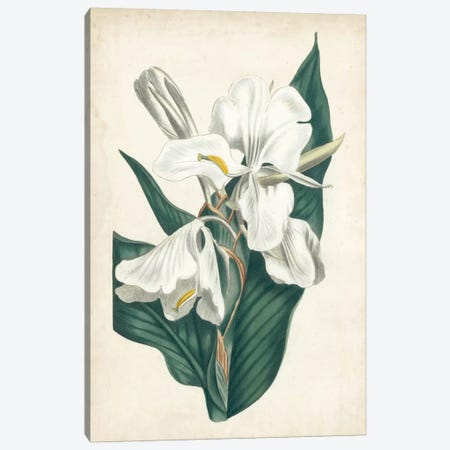 Ivory Garden IV Canvas Print #CTS16} by Curtis Canvas Artwork