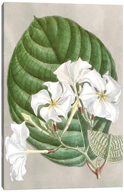 Alabaster Blooms I Canvas Art Print