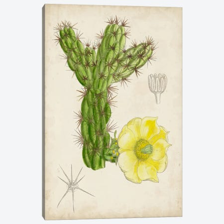 Antique Cactus I Canvas Print #CTS1} by Curtis Canvas Print